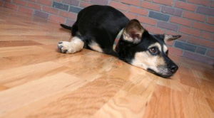 best hardwood floor finish reviews